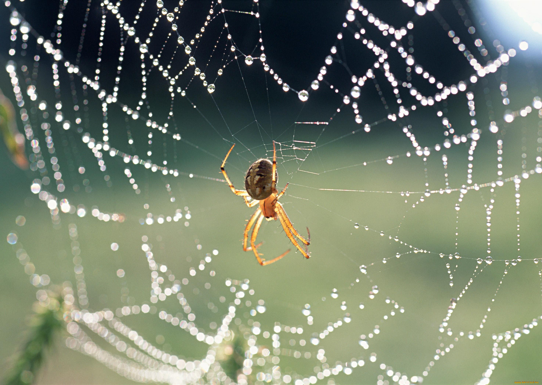 ситуации, которых примета увидеть вечером большого паука моменты приступов